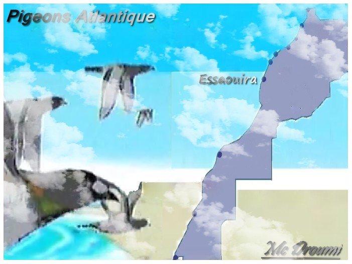 Association Pigeons Games Essaouira AUSC-AWSC
