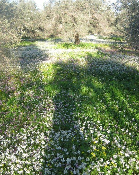 صور جمال ازهار الربيع والطبيعة الخلابة من فلسطين